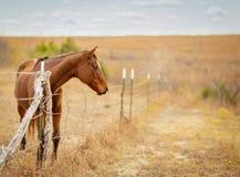 Häst på porten Royaltyfria Bilder
