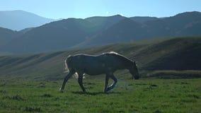 Häst på solnedgången arkivfilmer