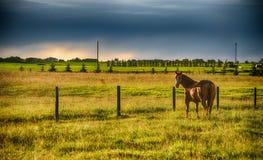 Häst på solnedgången Royaltyfria Bilder
