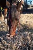Häst på solnedgångståenden royaltyfria foton