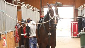 Häst på ställningsförberedelsen för konkurrens lager videofilmer