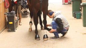 Häst på ställningsförberedelsen för konkurrens stock video