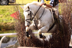Häst på staket A royaltyfri fotografi