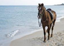 Häst på stranden Arkivfoto
