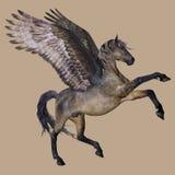 häst påskyndade pegasus royaltyfri illustrationer