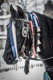 Häst Potrait Royaltyfria Bilder