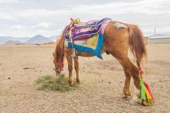 Häst som äter ett gräs Royaltyfri Bild