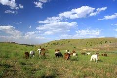 Häst som äter gräs på fält Arkivfoto