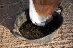 Häst som äter matning från en hink Arkivfoton