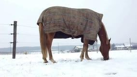 Häst som äter vid vintertid lager videofilmer