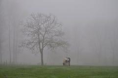 Häst som betar i dimman Fotografering för Bildbyråer