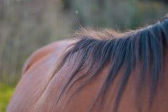 häst som betar i en äng royaltyfri bild