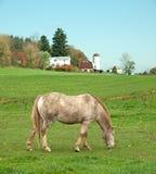 Häst som betar i fält Arkivfoto