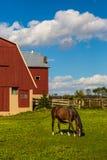 Häst som betar i lantgårdfält Arkivfoton