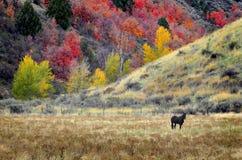 Häst som betar i nedgång Arkivbilder