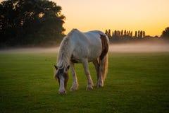 Häst som betar på allmänning royaltyfria foton