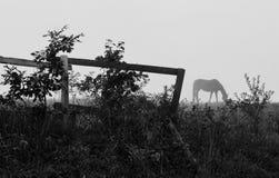 häst som betar på en äng i en dimma arkivbild