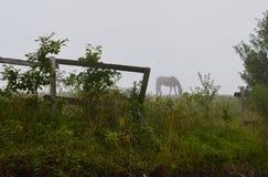 häst som betar på en äng i en dimma arkivbilder