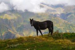 Häst som betar på kullen Arkivbilder