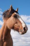 Häst som från sidan ser Arkivfoto