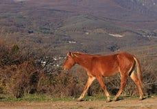 Häst som går vid banan Royaltyfri Bild