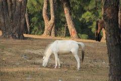 Häst som har hans mat i ensamhet Royaltyfria Bilder