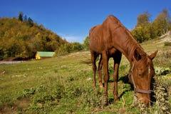 Häst som har lunch Fotografering för Bildbyråer