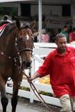 Häst som ledas till och med folkmassorna till den startande linjen, Saratoga löparbana, Saratoga Springs, New York, 2014 Royaltyfri Bild