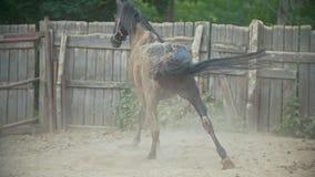 Häst som ligger i paddocken stock video