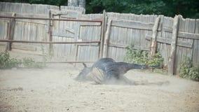 Häst som ligger i paddocken lager videofilmer