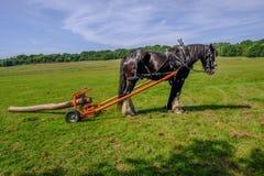 Häst som loggar, grevskap som poserar med hans släp som drar en stor journal royaltyfri bild
