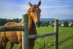 Häst som ser över ett staket på en lantgård royaltyfri bild