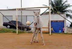 Häst som ser som en målvakt Fotografering för Bildbyråer
