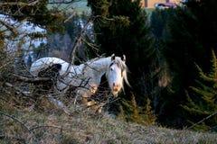 Häst som ser fotografen royaltyfri bild