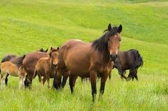 Häst som ser kameran Royaltyfri Foto