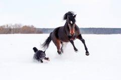 Häst som spelar med en hund royaltyfria foton
