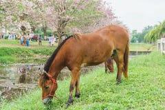 Häst som står den near kanalen med grönt gräs som är utomhus- Arkivbilder