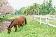 Häst som står nära paddock med grönt gräs Arkivbilder