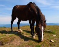 Häst som tuggar gräset royaltyfri bild