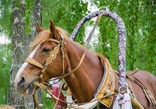 Häst som tuggar hö Arkivfoton
