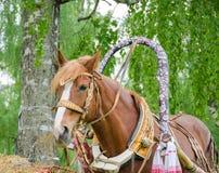 Häst som tuggar hö Arkivbild