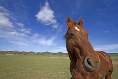 Häst & stor himmel Arkivfoton