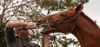 Häst- tandläkare som ger en rutinmässig tand- undersökning Arkivfoto