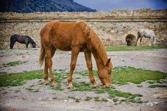 Häst tre om sprimgdagen Arkivfoton