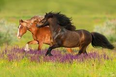 Häst två i blommor arkivbilder