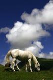 Häst under den blåa skyen Arkivfoto