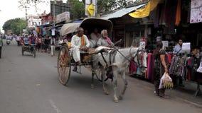 Häst & vagn i indisk gata lager videofilmer