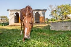 Häst vid stallen Royaltyfria Bilder