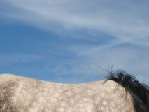 Hästabstrakt begrepp Arkivfoto