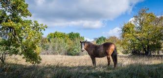 Hästanseende på fält Royaltyfri Bild